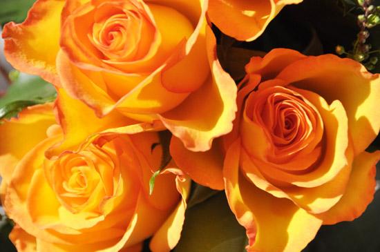 Rose289