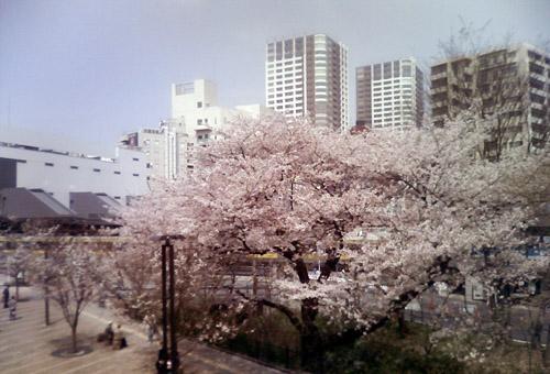 20100406_mitakab