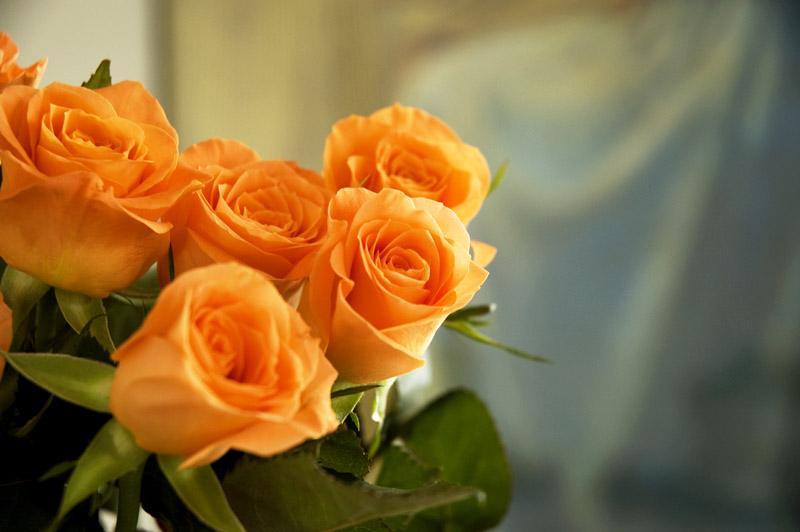 Orangerose056